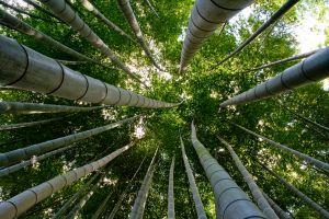 Planten En Bomen : Vlaamse wetenschappers maken kunststof uit planten en bomen nieuws